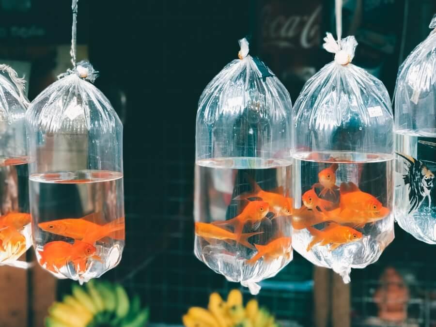 Рыбки в пакете